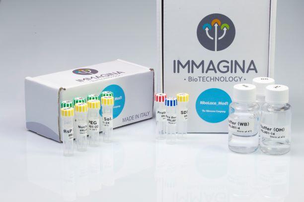 Immagina Biotechnology RiboLace