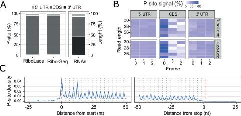 Ribosome profiling data charts